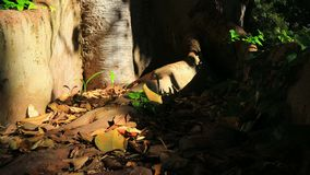 Radice dell'albero e foglie gialle stock footage