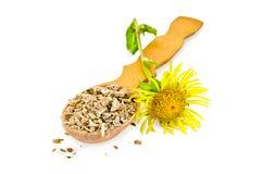 Radice dell'enula campana su un cucchiaio con il fiore immagini stock libere da diritti