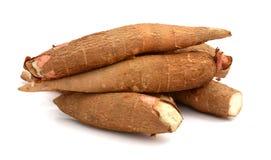 Radice della manioca Fotografie Stock