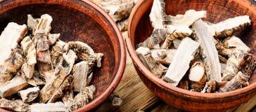 Radice di acorus calamus Fotografia Stock
