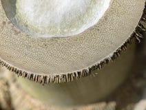 Radice di bambù Fotografie Stock