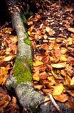 Radice e fogli dettagliati dell'albero Fotografie Stock