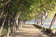 Radice sola circondata con gli alberi ed il lago Immagini Stock