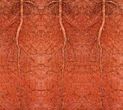 Radice in suolo Fotografia Stock