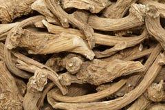 Radici asciutte organiche del rafano (armoracia rusticana) immagini stock libere da diritti