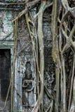 Radici che crescono sulle rovine, tempio di Prohm di tum, Angkor Wat Immagine Stock