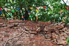 Radici del tronco del ficus che coprono un muro di mattoni Fotografia Stock
