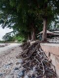Radici dell'albero Immagine Stock Libera da Diritti