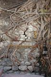 Radici dell'albero che crescono tramite il muro di mattoni   Fotografia Stock Libera da Diritti