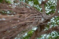 Radici dell'albero che rubacchiano giù la fine su Immagini Stock