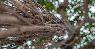 Radici dell'albero che rubacchiano giù la fine su Fotografie Stock