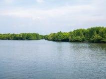 Radici dell'albero della mangrovia in acque lente in Lubuk Kertang, la Sumatra Settentrionale, Indonesia Fotografia Stock Libera da Diritti