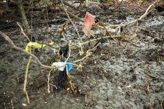 Radici dell'albero delle mangrovie di inquinamento Immagini Stock