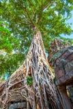 Radici dell'albero gigante immagine stock libera da diritti