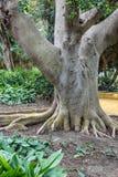 Radici dell'albero, tronco di albero piano fotografia stock libera da diritti