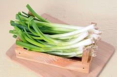 Radici della cipolla verde Fotografia Stock