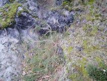 Radici della foresta immagine stock