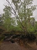 Radici della foresta fotografie stock