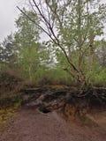 Radici della foresta immagine stock libera da diritti