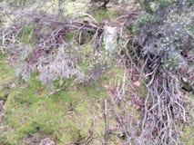 Radici della foresta fotografia stock