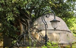 Radici della lampada e dell'albero di via Fotografie Stock