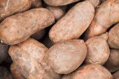 Radici della patata dolce, fine sulla foto Fotografia Stock