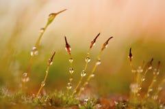 Radici della pianta Fotografia Stock Libera da Diritti