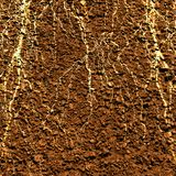 Radici della pianta Immagine Stock Libera da Diritti