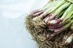 Radici di giovane cipolla fresca, mazzo di scalogni, erba cipollina, cipolla di inverno, Immagine Stock