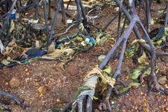 Radici di plastica dell'albero delle mangrovie di inquinamento Fotografia Stock Libera da Diritti