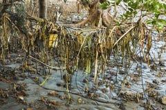 Radici di plastica dell'albero delle mangrovie di inquinamento Immagine Stock Libera da Diritti