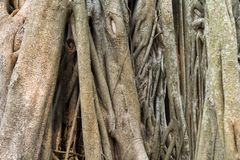 Radici ed alberi fotografia stock