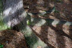 Radici ed ombre Fotografia Stock Libera da Diritti