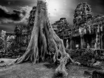 Radici enormi della giungla Fotografia Stock