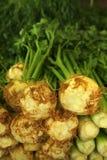 radici grezze di parslet del mucchio del sedano Fotografia Stock