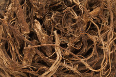 Radici indiane organiche del coleus (barbatus di Plectranthus) immagini stock libere da diritti