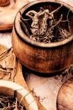 Radici secche di Valeriano fotografia stock libera da diritti