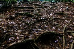Radici sottili sul suolo e sulle foglie Fotografie Stock