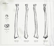 radie stock illustrationer
