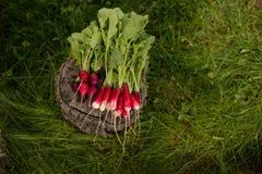 Radieh fresco em um fundo da grama verde Vista horizontal fotos de stock