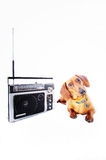 Radio dog Royalty Free Stock Photo