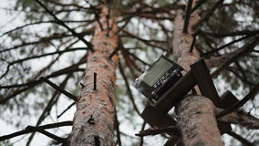 Radio on the tree against the sky stock video