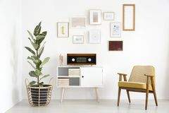 Radio in retro living room. Radio on white cupboard between ficus tree and wooden armchair against white wall with gallery in retro living room interior royalty free stock images