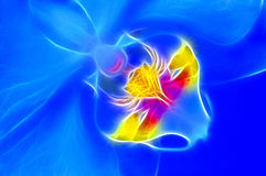 Radiografía de la orquídea Foto de archivo