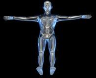 Radiografía de un cuerpo humano Foto de archivo libre de regalías