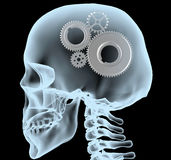 Radiografía de una cabeza con los engranajes en vez del cerebro Imagen de archivo libre de regalías