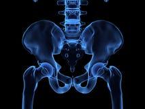 Radiografía del caderas humanas stock de ilustración