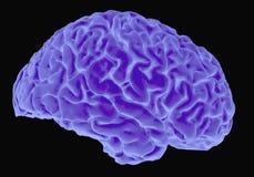 Radiografía del cerebro humano ilustración del vector