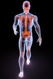Radiografía humana Fotografía de archivo libre de regalías