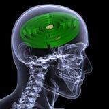 Radiografía esquelética - laberinto Foto de archivo